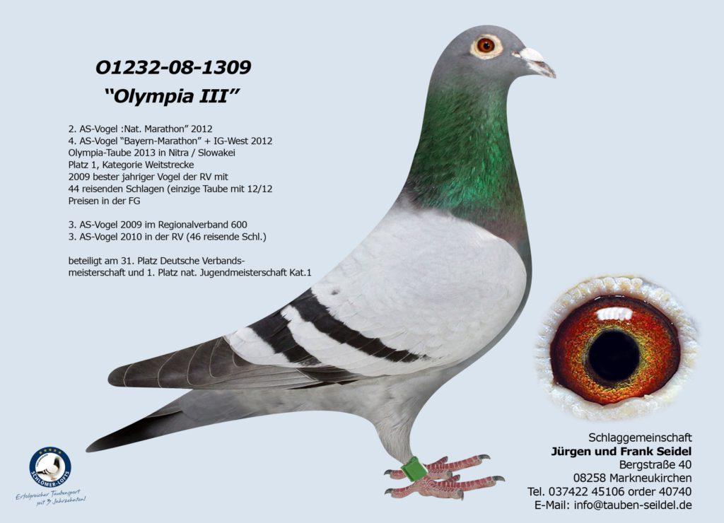 """01232-08-1309V """"Olympia III"""" Bester Vogel der Schlaggemeinschaft Seidel"""